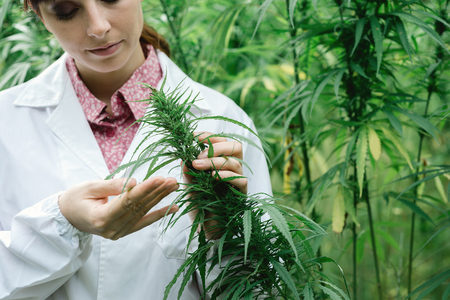 How cannabis extract could be the ultimate Acne Cure